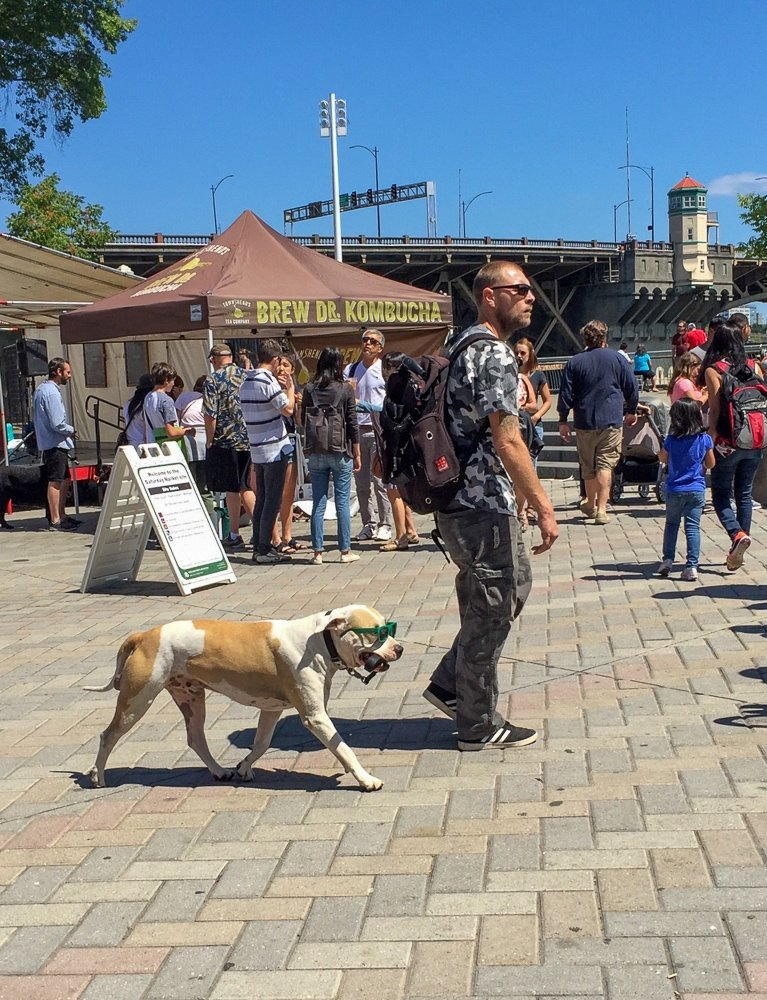 A man and his dog sport sunglasses at Portland Saturday Market