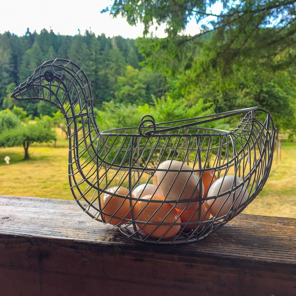 Freshly collected eggs for breakfast on an Oregon farm stay