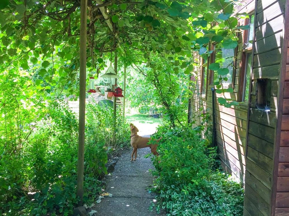 Farm dog in Alsea, Oregon