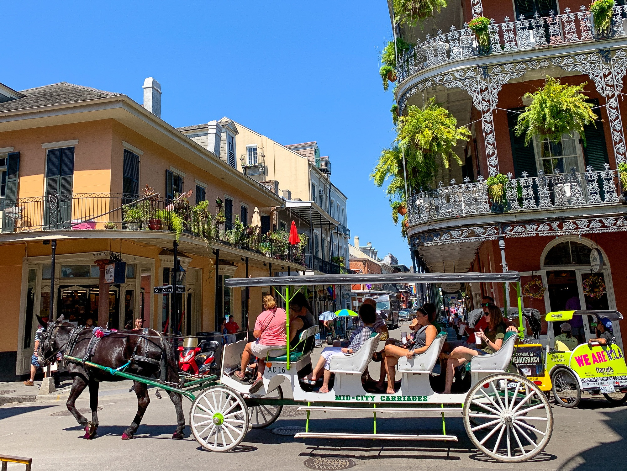 Mule-drawn carriage ride in the French Quarter in New Orleans, Louisiana