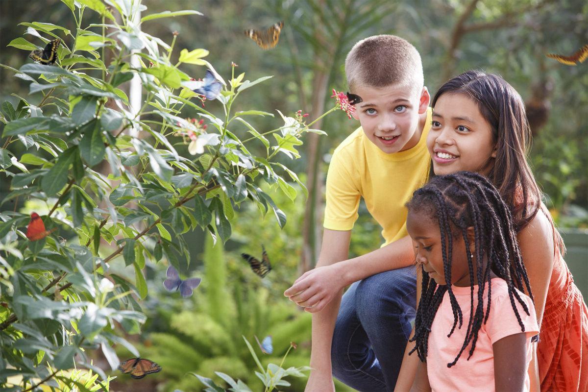 Kids at Butterfly Wonderland