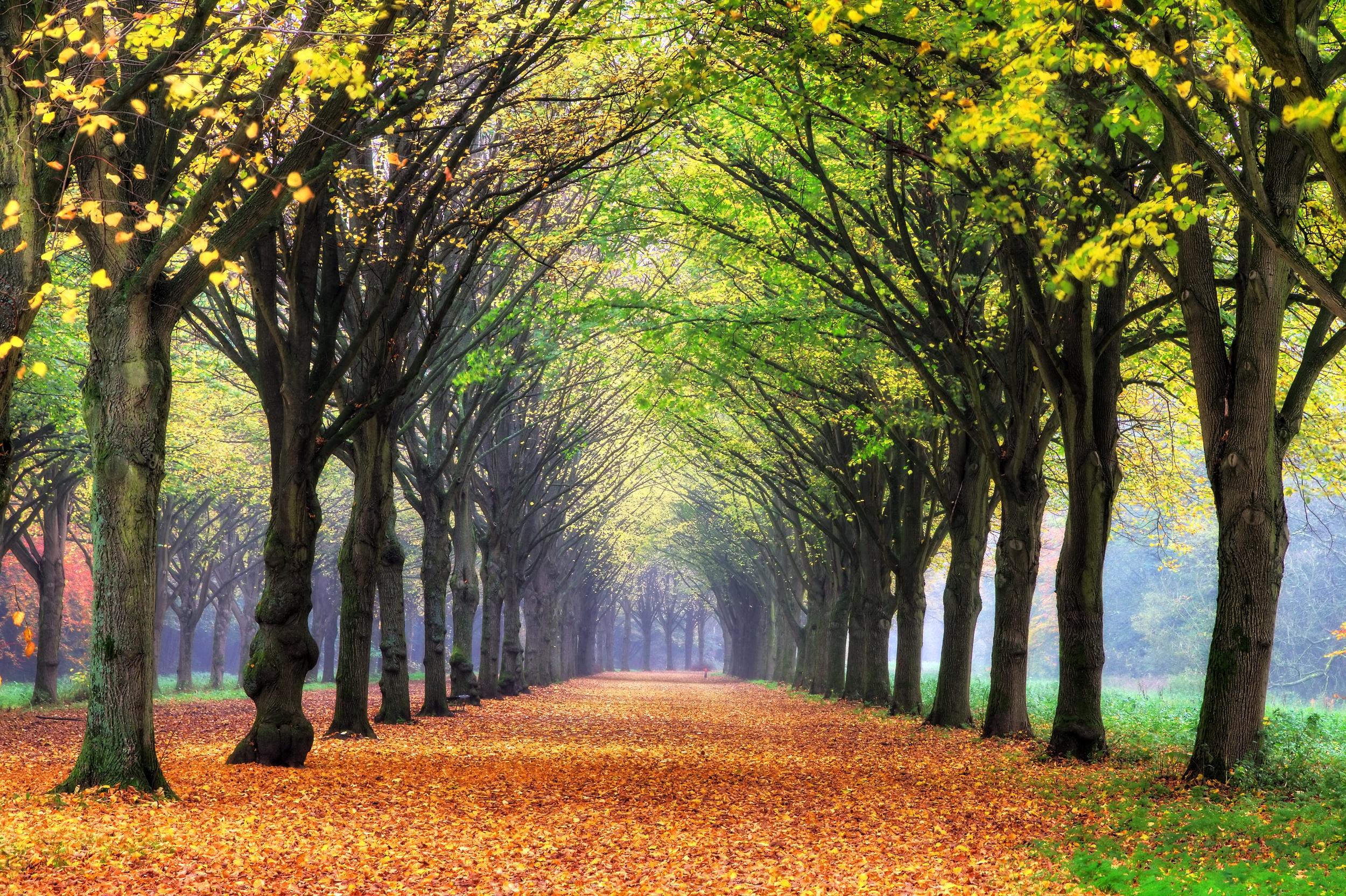 Amsterdamse Bos - Amsterdam Forest