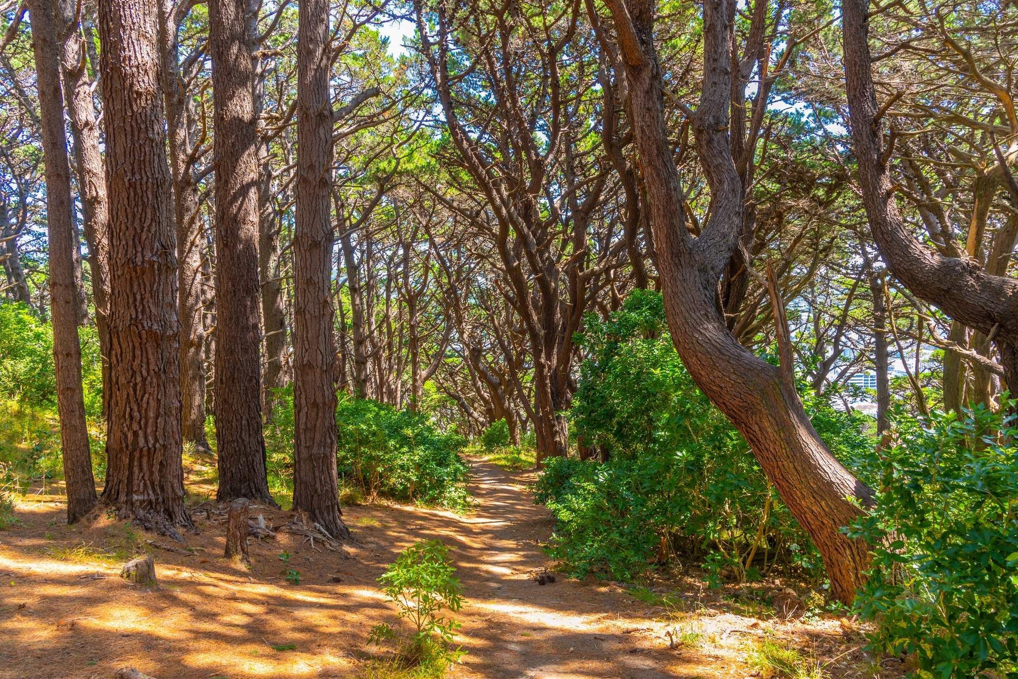 Forest path at Mount Victoria in Wellington