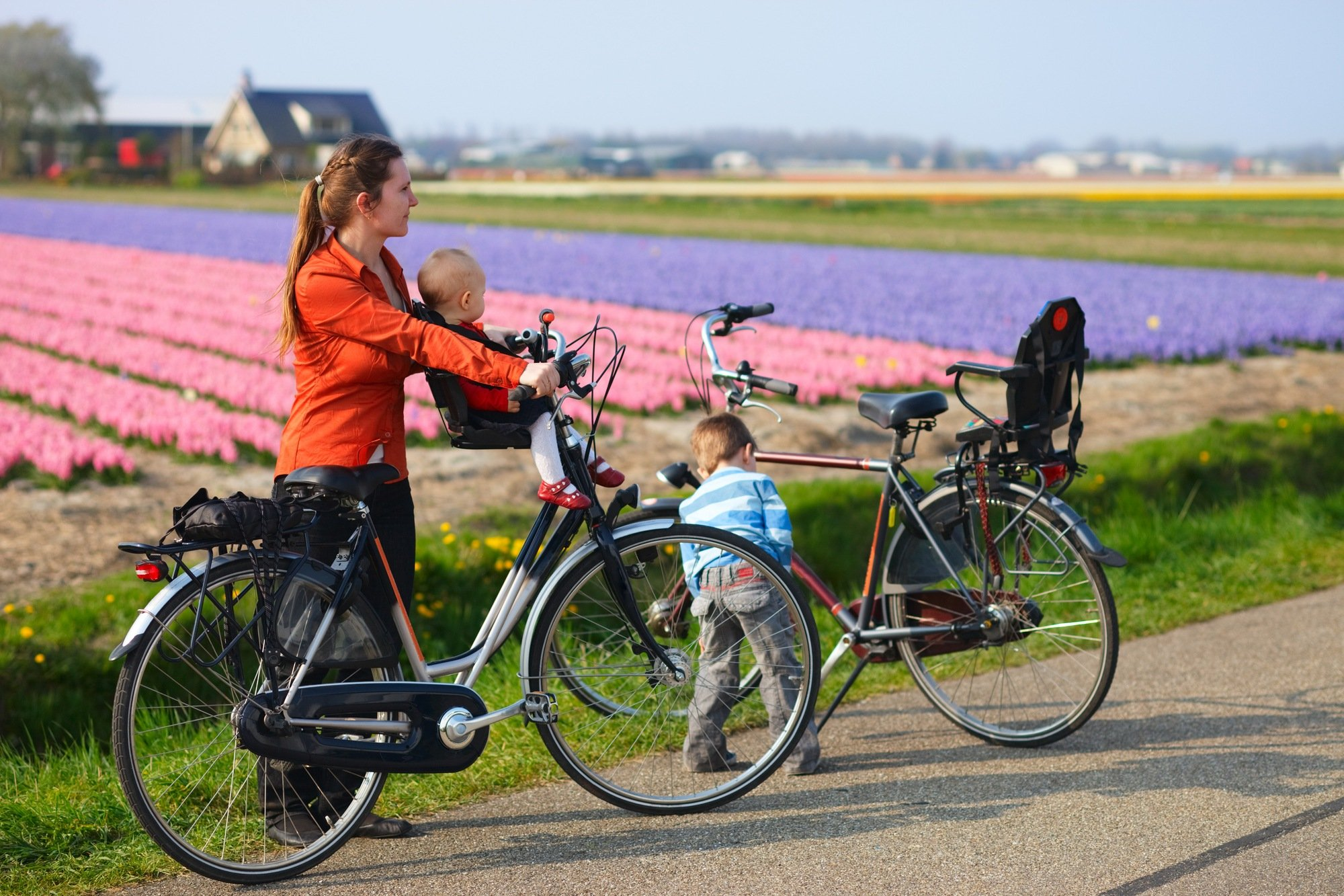 A family bicycling past tulip fields in the Netherlands