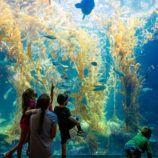 San Diego Birch Aquarium at Scripps Institution of Oceanography in La Jolla