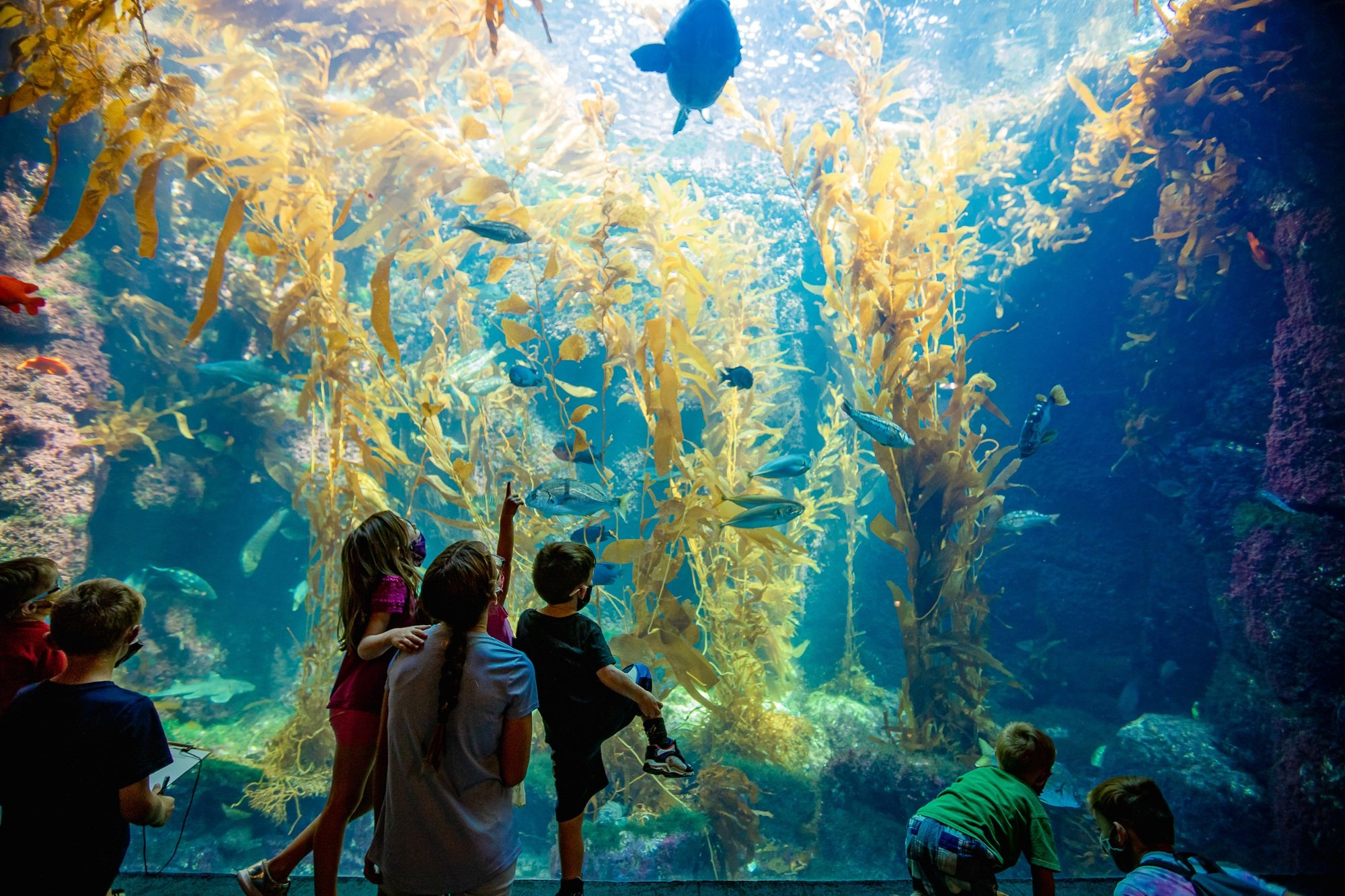 Kids at the Kelp Forest Tank at San Diego Birch Aquarium