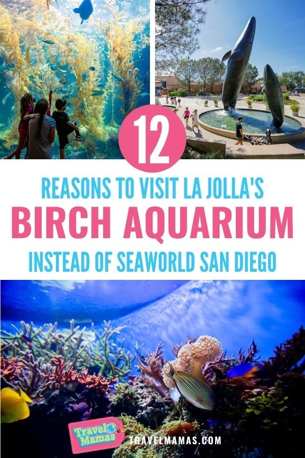 Birch Aquarium vs. SeaWorld San Diego