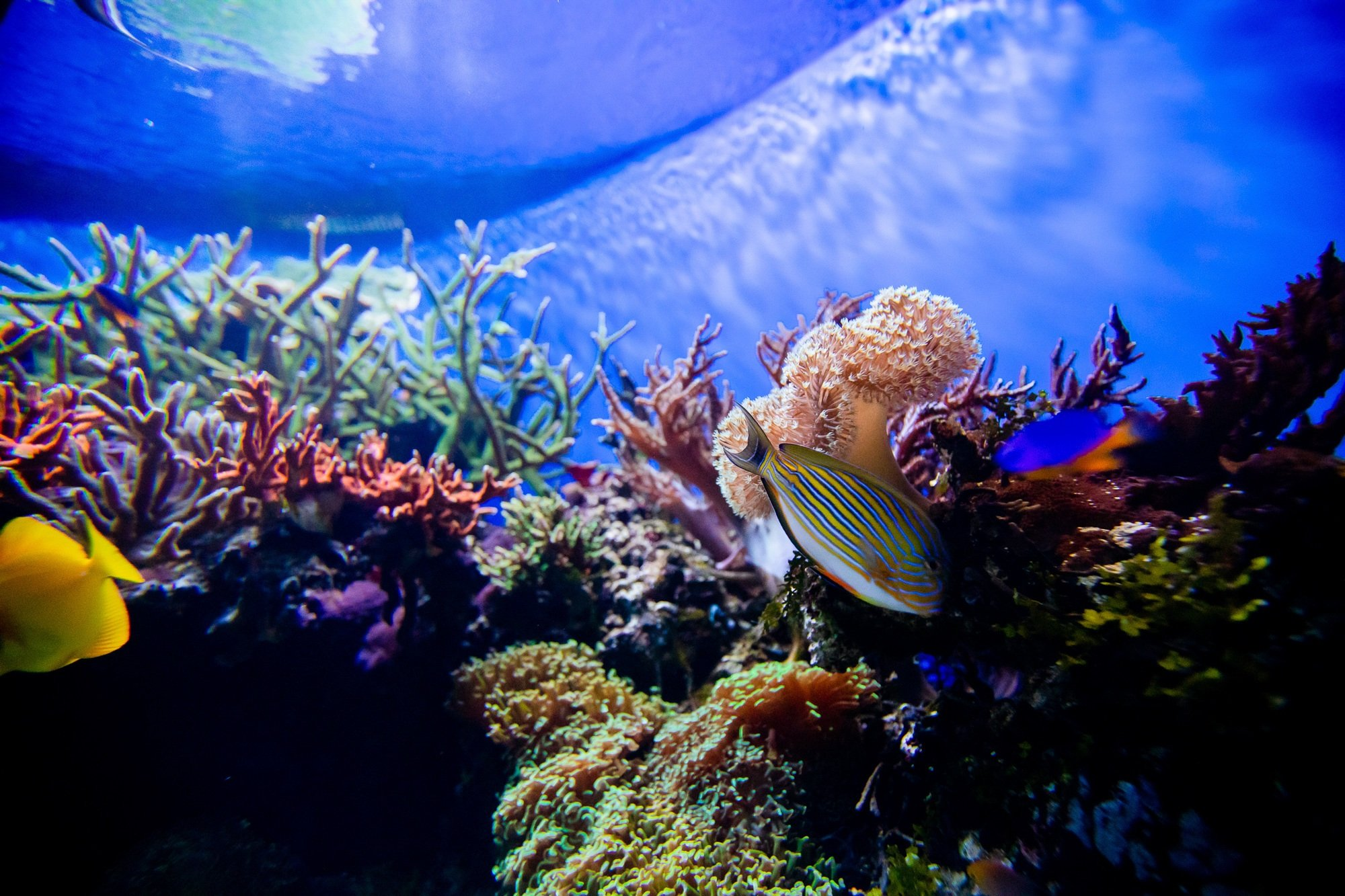 Beautiful fish and coral at Birch Aquarium at Scripps in La Jolla