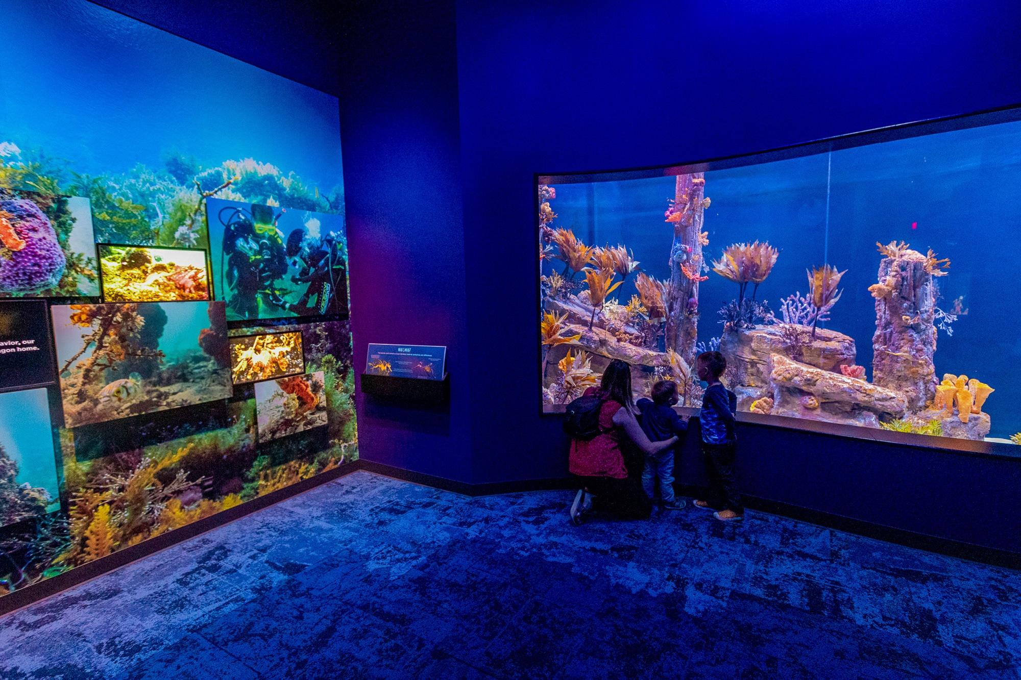 Seadragons & Seahorses exhibit