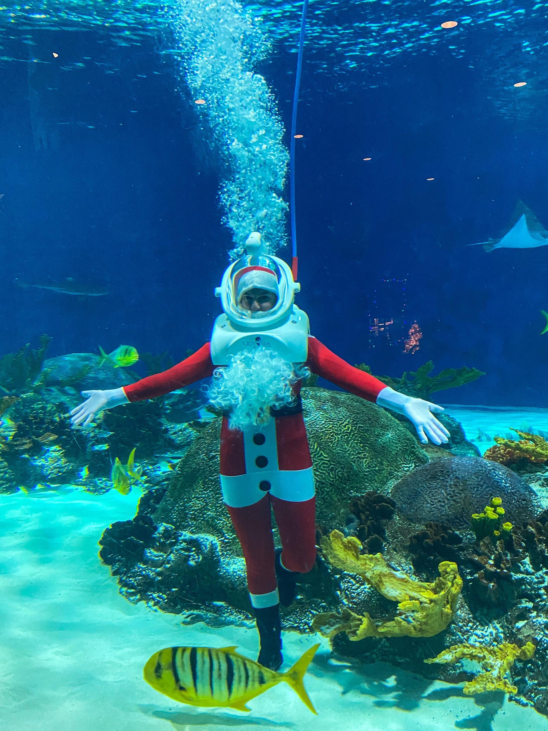 Santa underwater at Odysea Aquarium