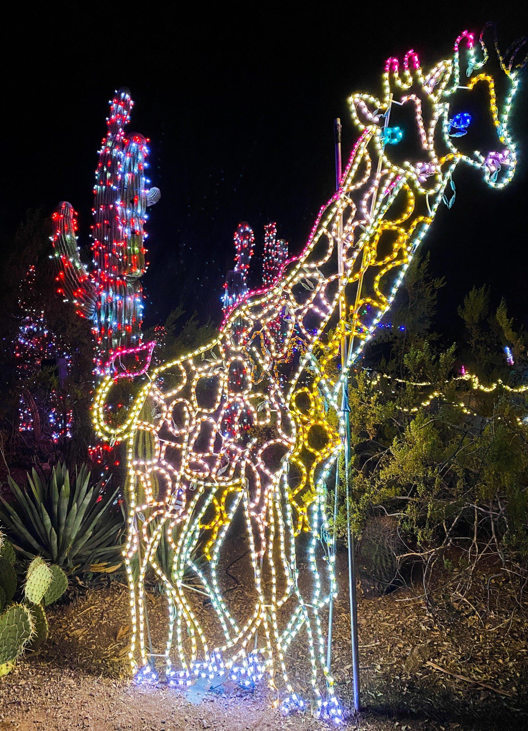 Glowing giraffes at the Phoenix Zoolights