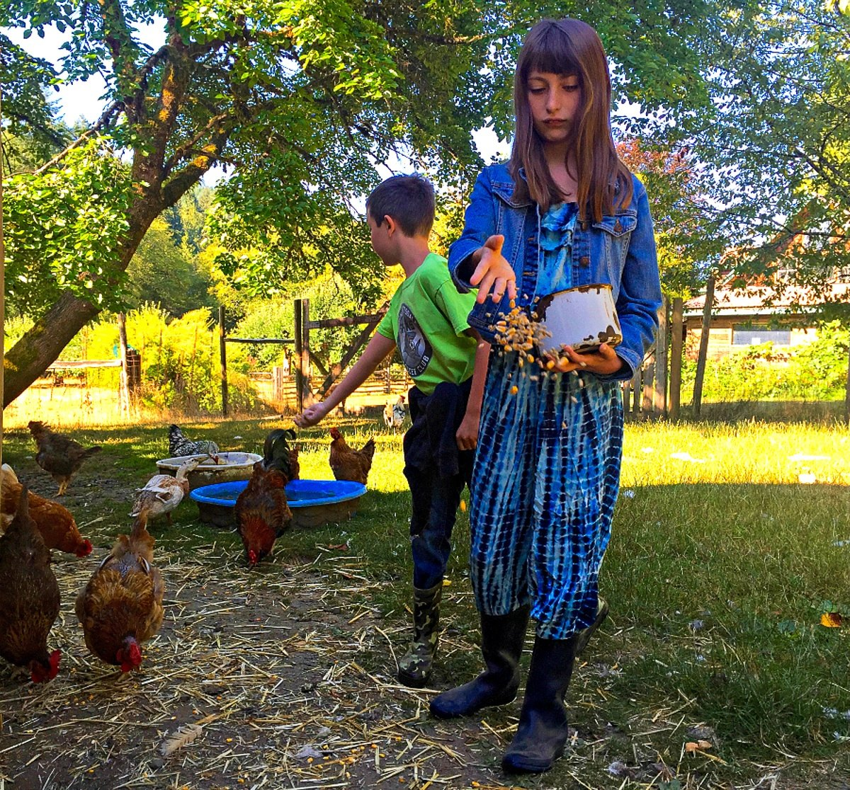 Kids feeding ducks and chickens during a farm stay vacation