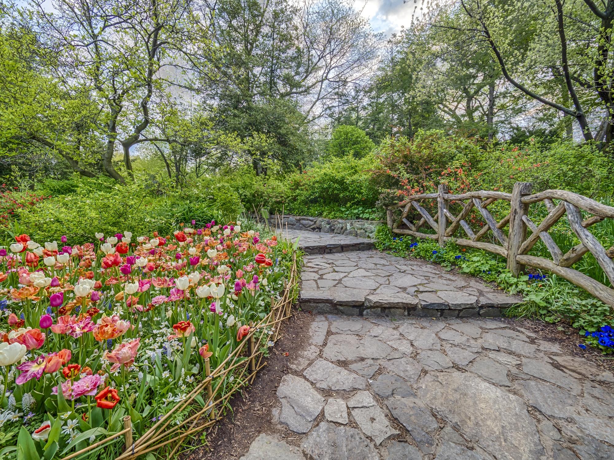Shakespeare Garden in Central Park in spring