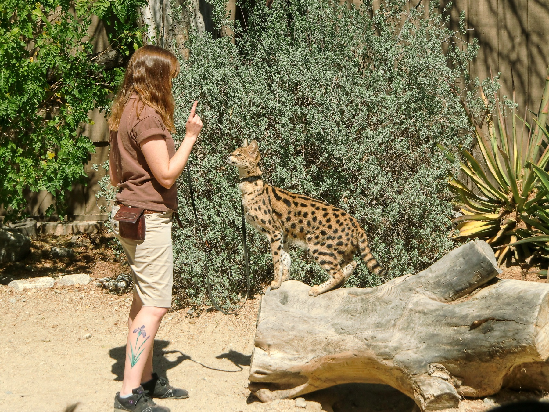 A wildlife show at the Living Desert in Palm Springs