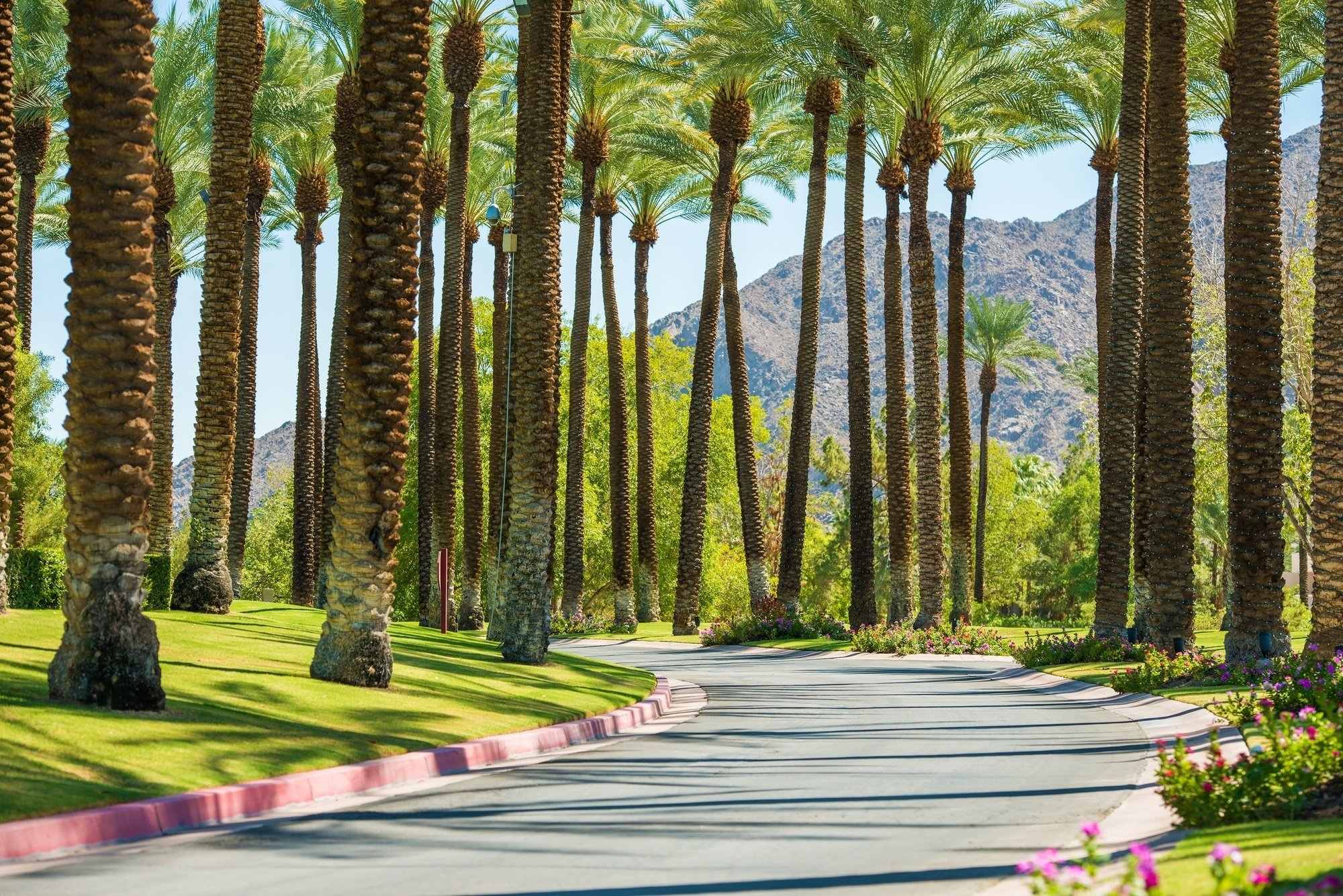 Iconic palm trees in Palm Springs, CA