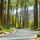 Palm Springs palm trees