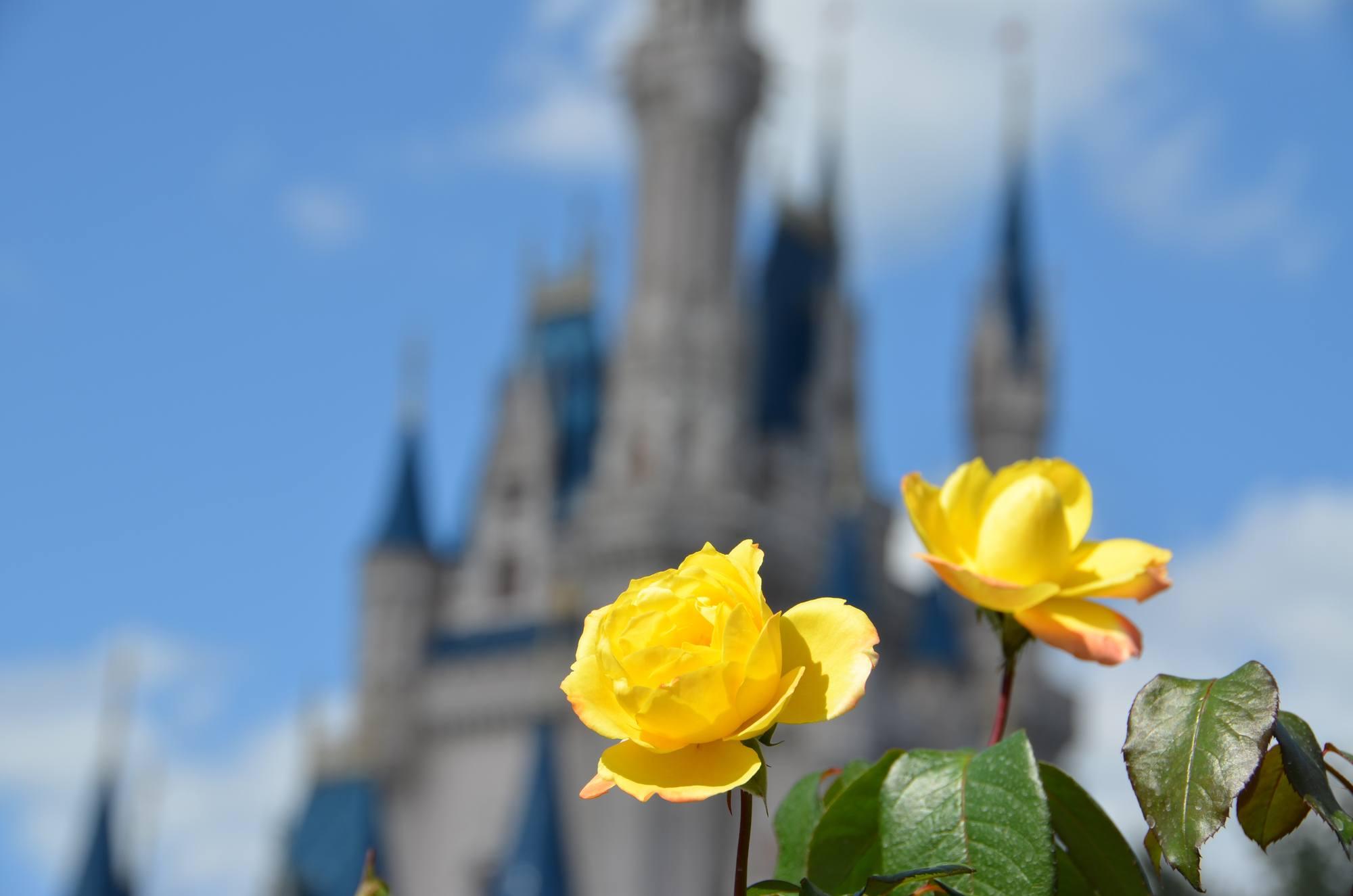 Cinderella Castle, the icon of Magic Kingdom Park at Walt Disney World Resort