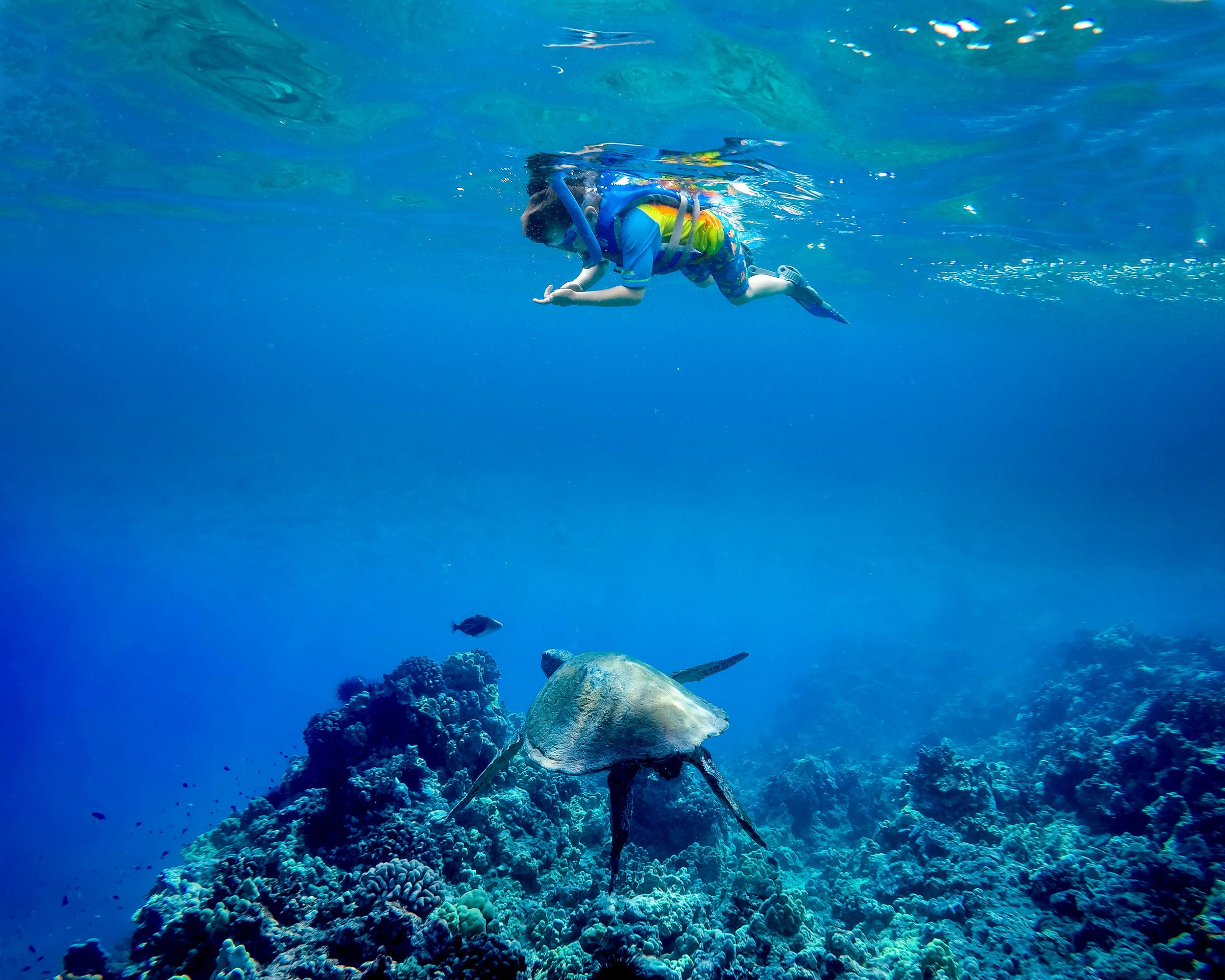 Molokini snorkel tour on Maui with kids