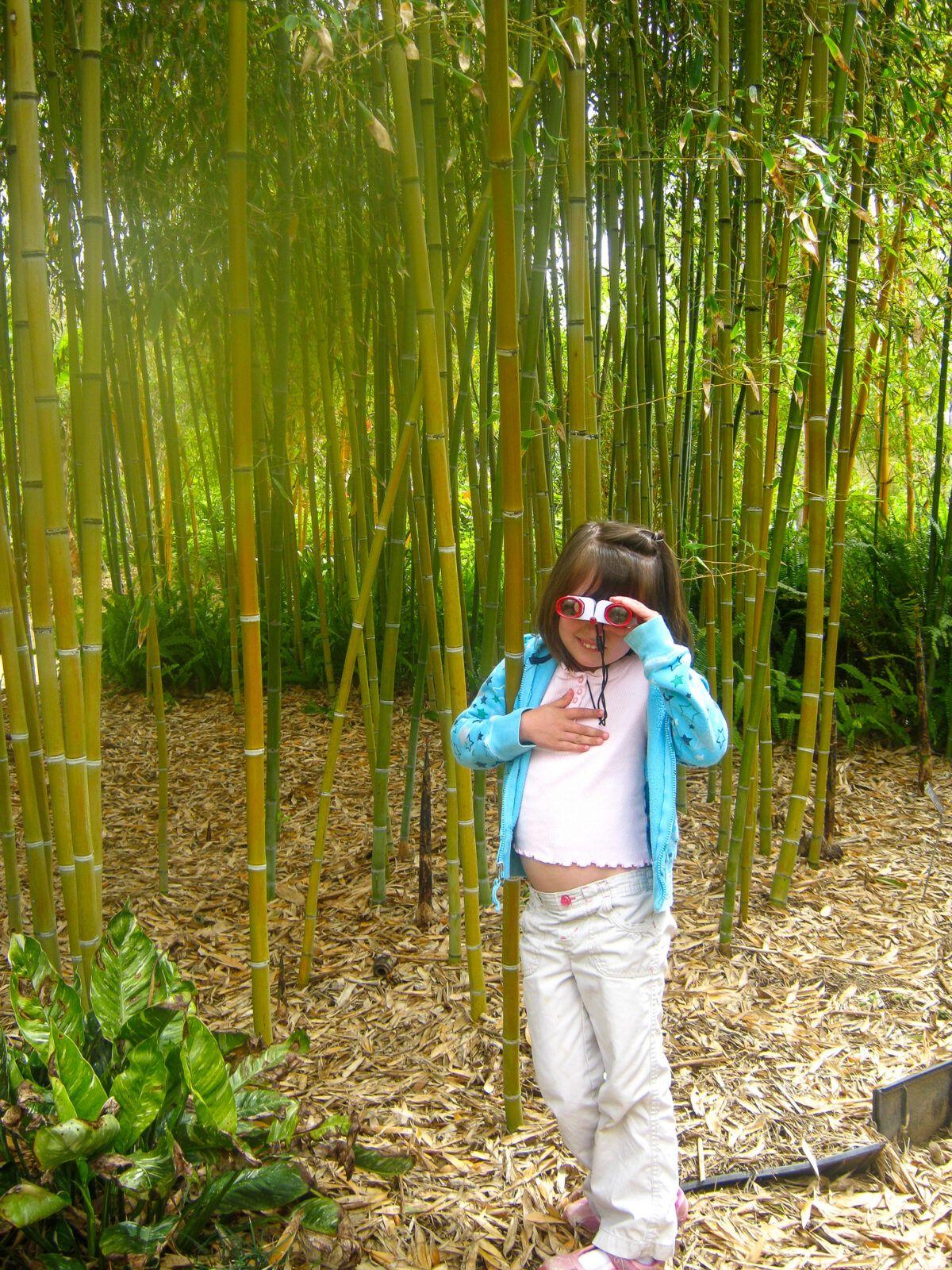 Little girl in the Bamboo Garden, San Diego Botanic Garden