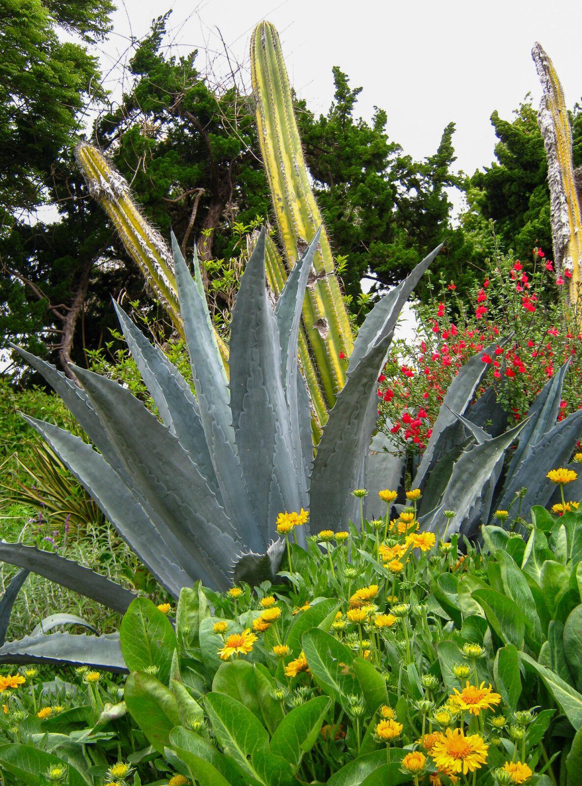 New World Desert Garden at San Diego Botanic Garden