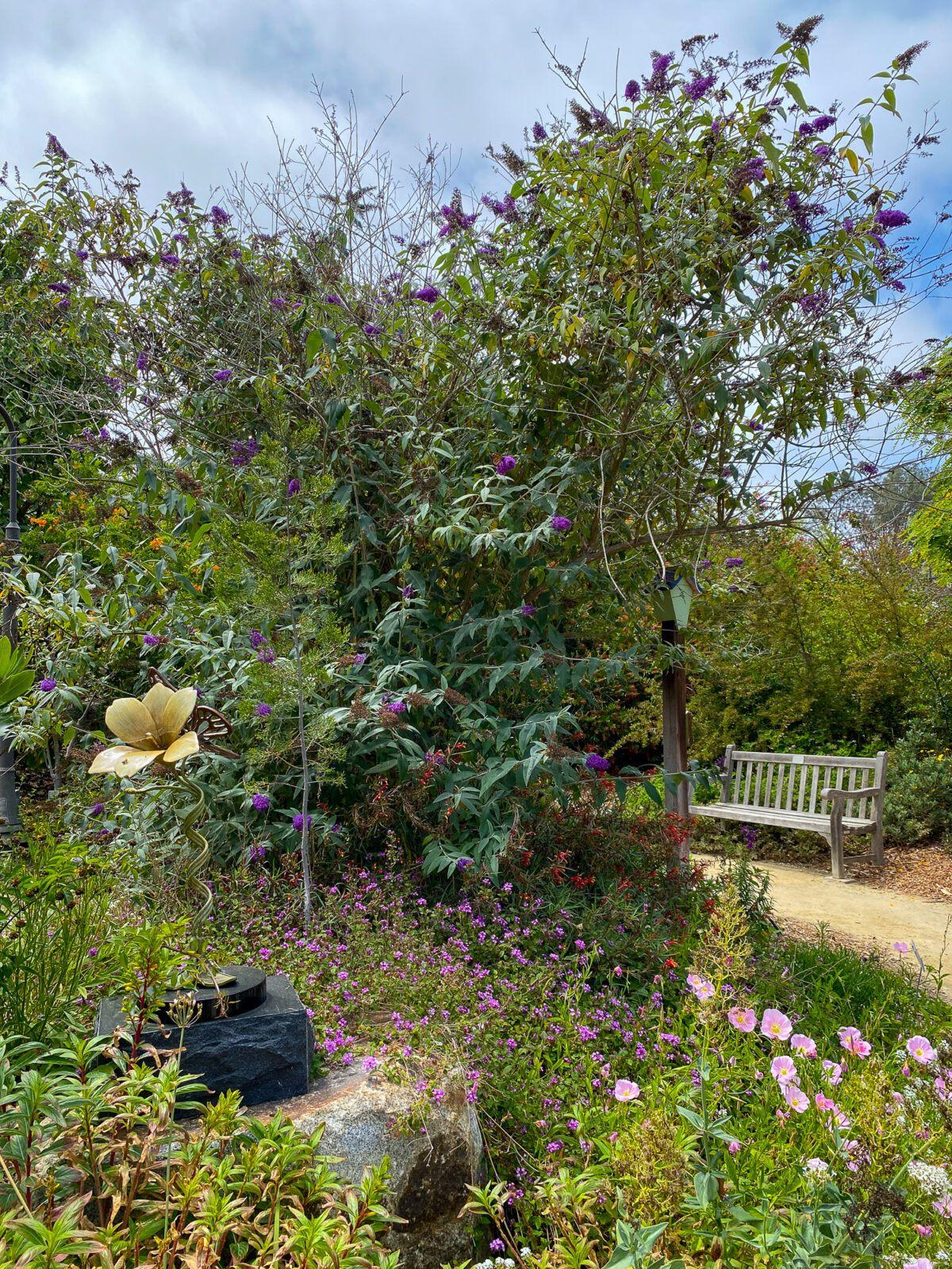 California Gardenscapes at San Diego Botanic Garden