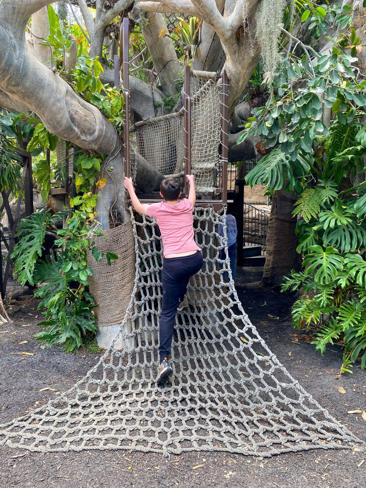 Young teen at Toni's Treehouse at San Diego Botanic Garden