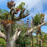 San Diego Botanic Garden Guide