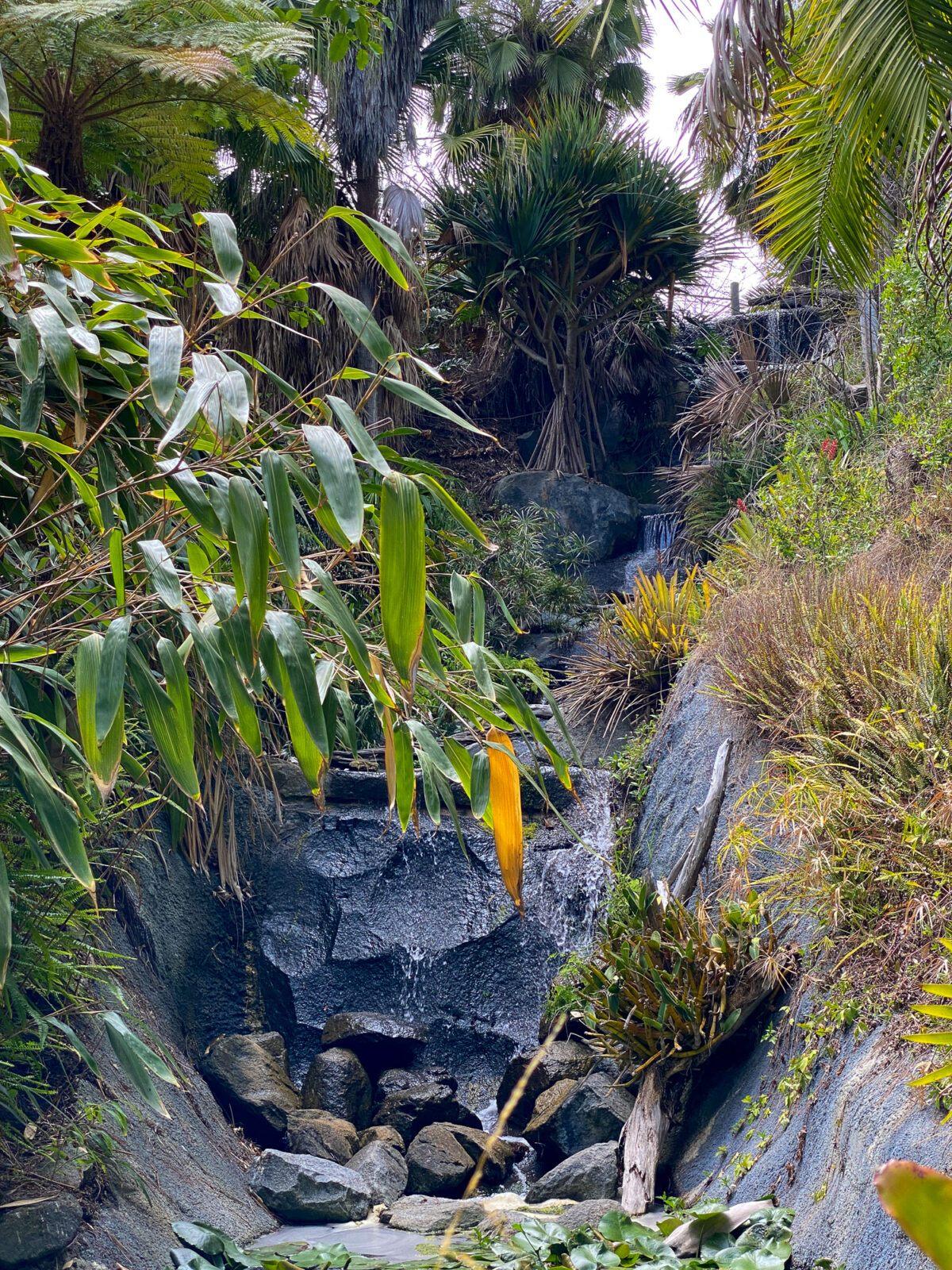 A waterfall in the San Diego Botanic Garden's Tropical Rainforest