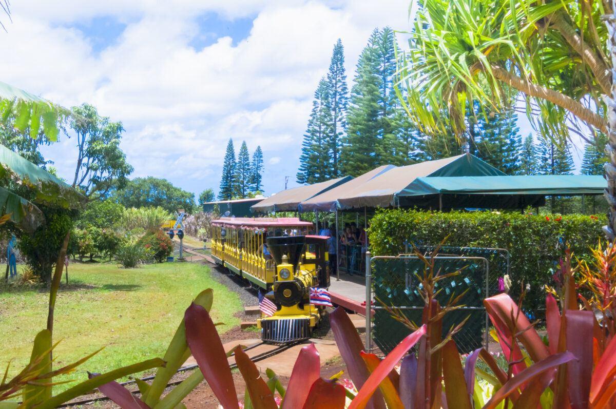 Kids love riding the train at Dole Plantation