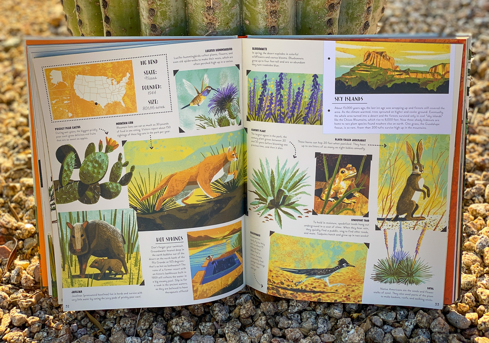 """Details about Big Bend in """"National Parks of the USA"""" -- a book for kids"""