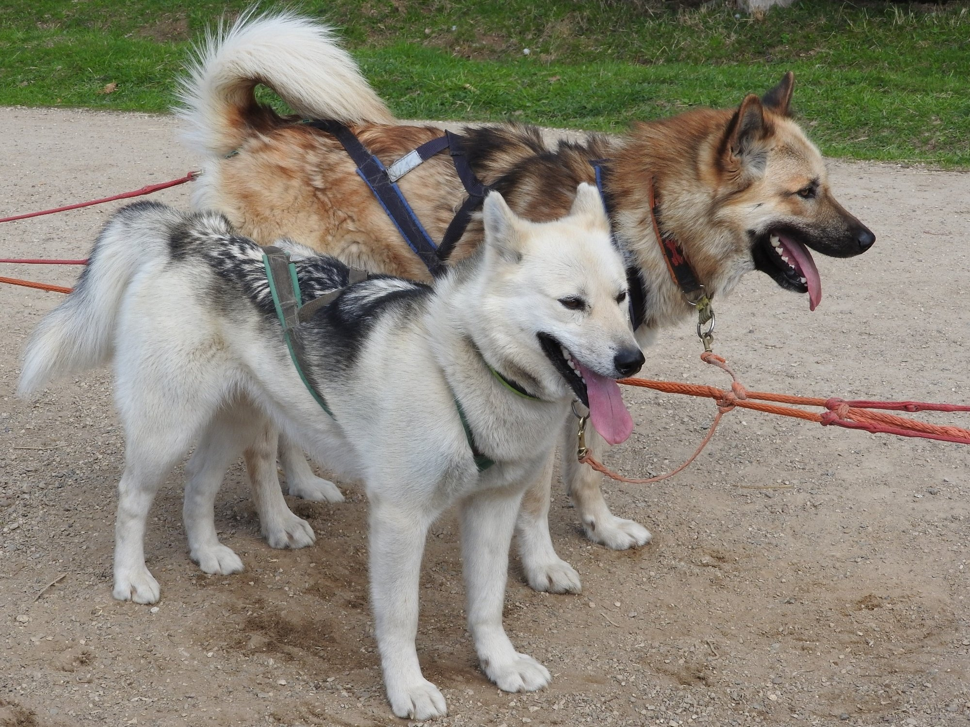 Sled dogs make Denali one of the best national parks for kids