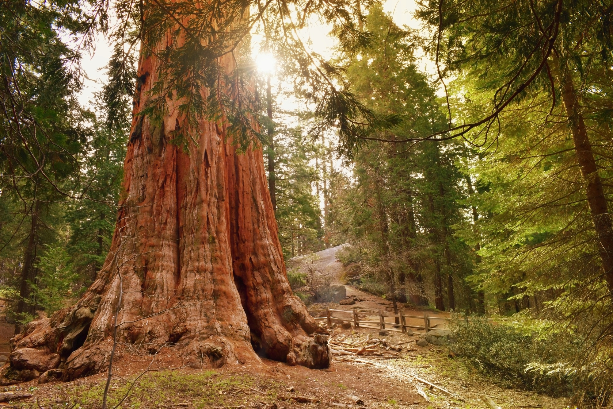 The General Grant Tree, the second largest tree in the world, in Kings Canyon National Park